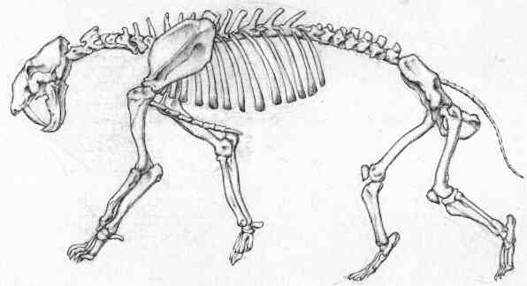 Drawing, skeleton